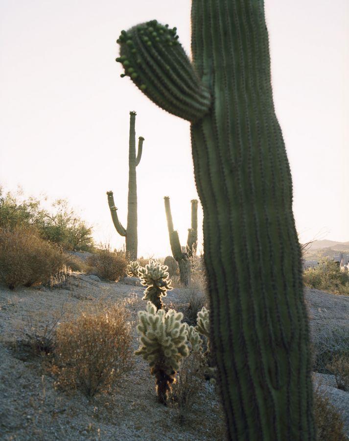 6_Kaktus_F49B47